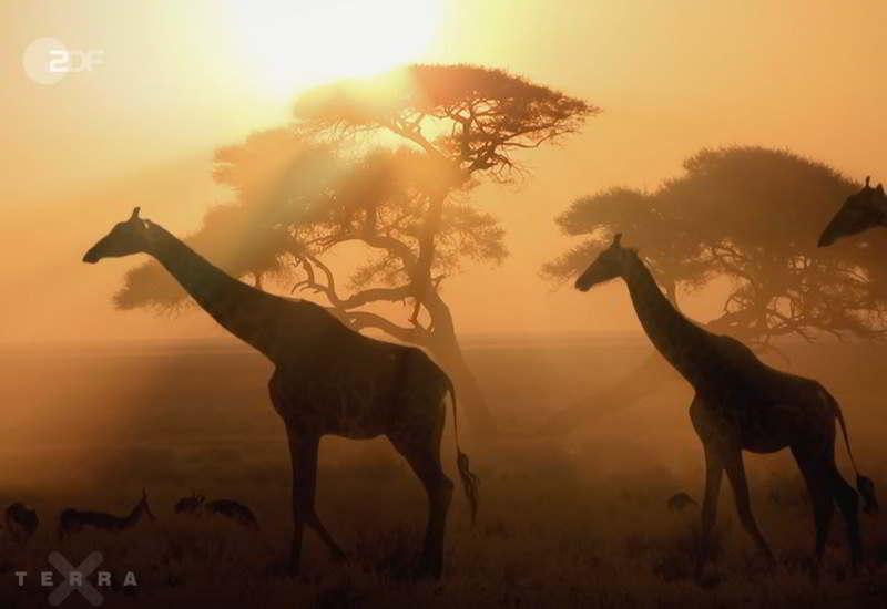 Terra X Bei Reinhard In Namibia